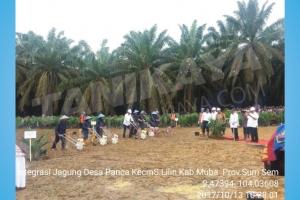 Alat Tanam Jagung Tanikaya Dalam Acara Peremajaan Sawit di Kabupaten Musi Banyuasin Oleh Presiden Joko Widodo